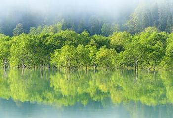 白川湖岸公園水没林.jpg